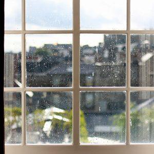 Rosa na oknach